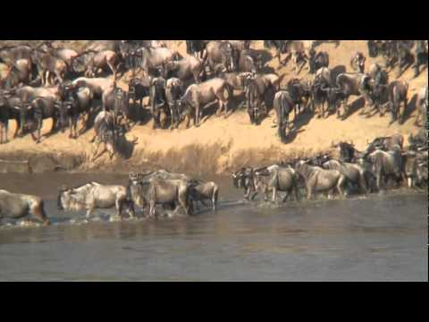 THE GREAT MIGRATION Serengeti - Mara.mp4