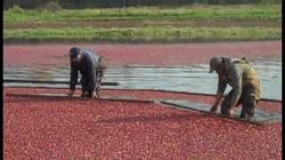A Visit to Upper Canada Cranberries