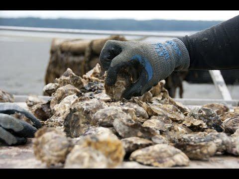 Sustainable Shellfish Aquaculture In Washington