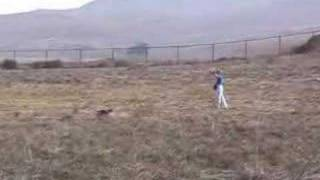 Bobbie And Ripkin The Border Terrier Run A Track