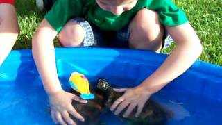 TURTLES & LITTLE BOYS   Map & Yellow Bellied Slider Turtles Love The Kids