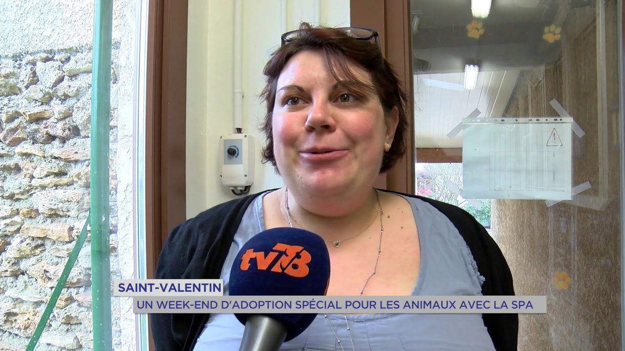 Yvelines | St Valentin : Un week-end d'adoption spécial pour les animaux avec la SPA