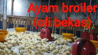 Pemanas Ayam Broiler dengan Bahan bakar oli bekas