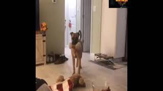 Animals funny video