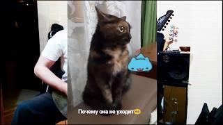 Кошка слушает тяжеляк.