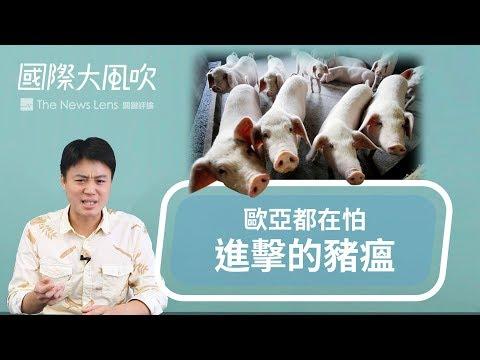 國際大風吹|非洲豬瘟:中國疫情只排世界第七,為何各國都在緊張?|EP34