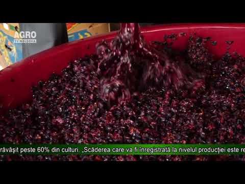 Franţa va avea cea mai proastă producţie de vin