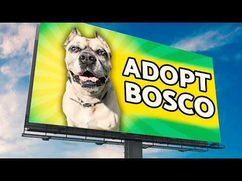 No One Wants This Homeless Dog So I Put Him On Billboards!