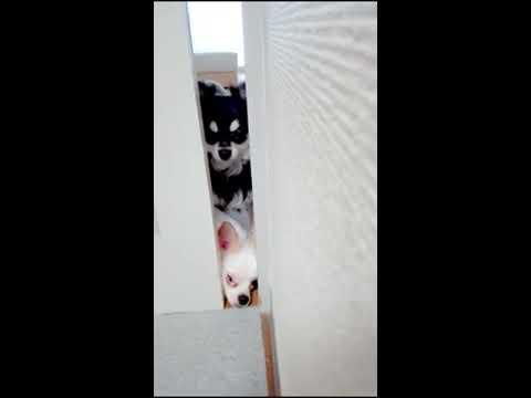 ドアの隙間から・・・必死に何かを訴える犬