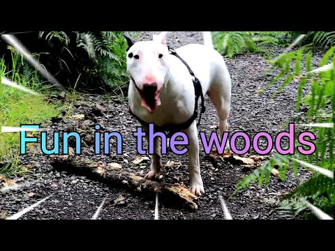 Fun in the woods with my Bull terrier Tess :)
