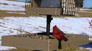 Wild Bird House : Red Bellied Woodpecker, Cardinal, Chickadee, Blue Jay : Backyard Bird Watching