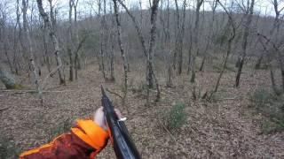 Abbattimento 08-01-17 - Caccia al Cinghiale - La Squadra dei Monti
