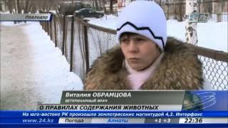 В Павлодаре ужесточили правила содержания собак
