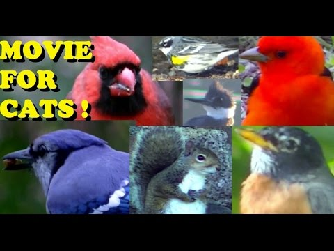 AMAZING Videos for Cats to Watch ! 2 Hours of Birds,Squirrels, and Rabbits,