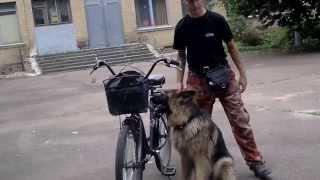 Видео урок с собакой.