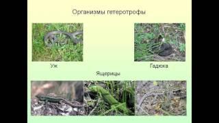 Презентация Экологические факторы среды и их влияние на организм