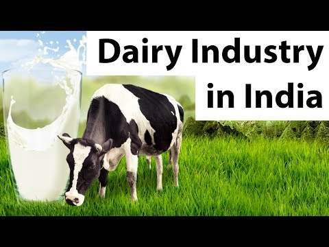 Dairy Industry in India - Problems, challenges and the future of Indian dairy industry