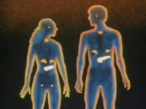 The Endocrine System: How it Works - YouTube