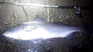 Перший охоронець стрипер - Лонг-Айленд-Норт-Шор в смужку бас риболовля вночі