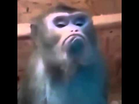 Смешные истории про обезьян видео
