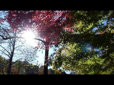 live in tokyo japan nerima-ku Shakujii-park 紅葉 1050320