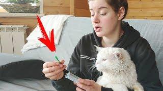 Как вытащить КЛЕЩА из животного или человека? How to Remove a tick
