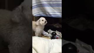 My dog is fanny. She loves this alarm song. Hahaha I hope you favor...