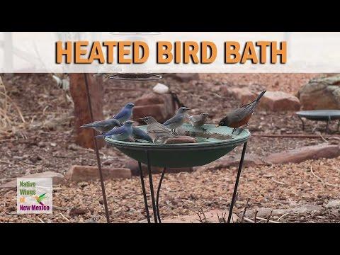 Heated Bird Bath in Santa Fe, New Mexico - January 2017