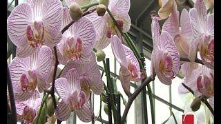 Ovako Se Presađuju Orhideje