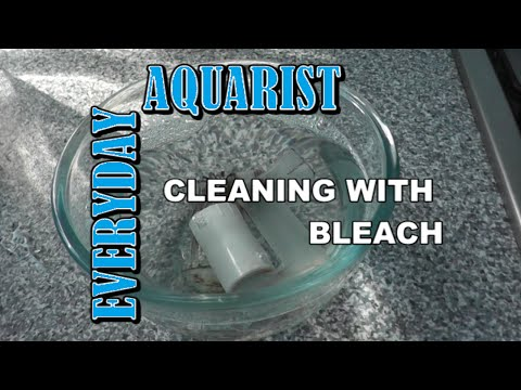 How To Kill Aquarium Algae With Bleach