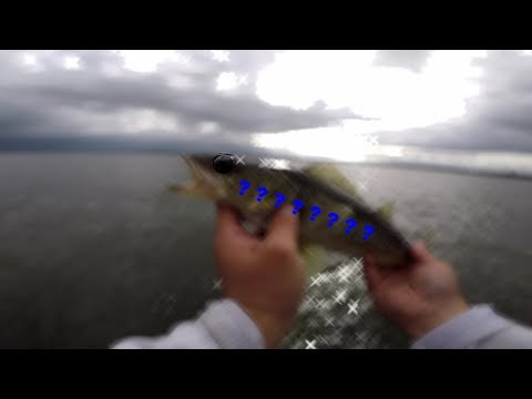 Lake Oneida Smallmouth Fishing (A - Rig + Surprise Catch)