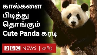 Zookeeper கால்களை விடாமல் இறுகப்பற்றி கொண்ட Panda கரடி