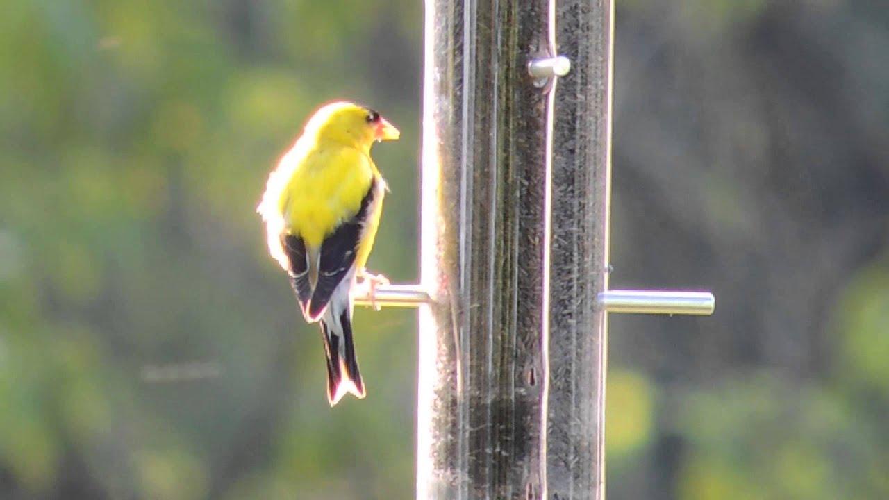prodlist garden bird through fly store feeders asp scripts recycled songbird plastic at feeder thru platforms yellow
