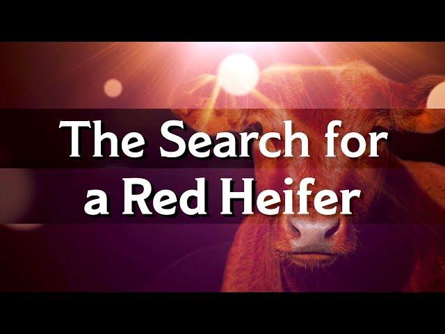 Jeanne Nigro on the Red Heifer