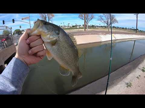Canal/Pond Fishing (Phoenix Arizona)