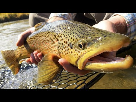 FLY FISHING SLANG AND TERMINOLOGY EP 1