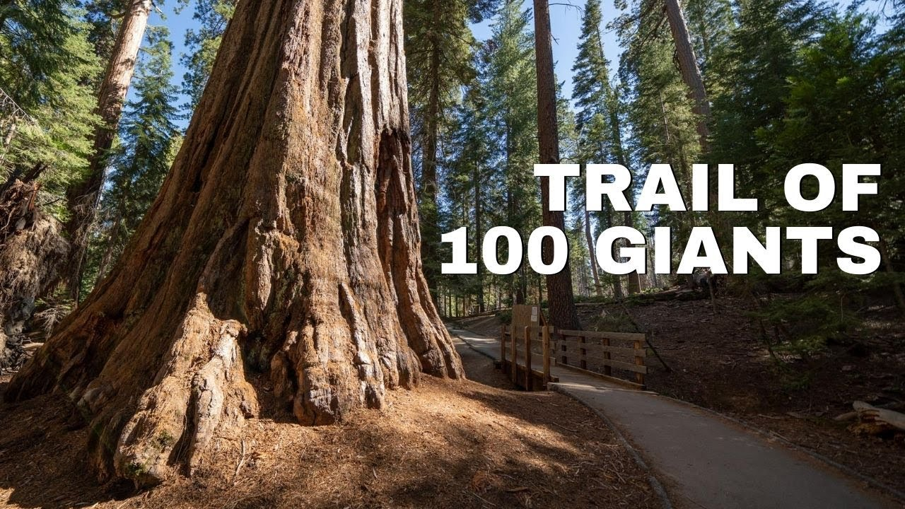 Trail of 100 Giants in Sequoia National Forest