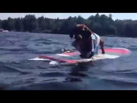 Long dog surfing on a short board