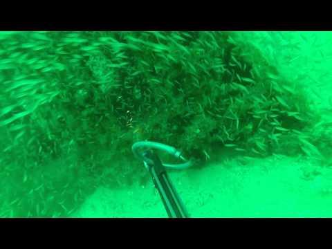 Panama City Beach Spearfishing.  Artificial Reef Program.