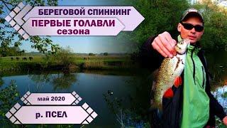 ПЕРВЫЕ ГОЛАВЛИ сезона 2020 САМЫЙ верхний ПСЕЛ Береговой спиннинг ЩУКА ОКУНЬ ГОЛАВЛЬ