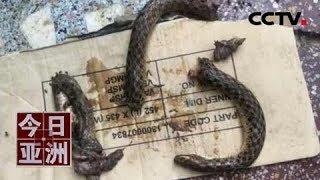 [今日亚洲]速览 奇闻!遭蛇咬当场反击 印度醉酒男子将蛇咬成几段| CCTV中文国际