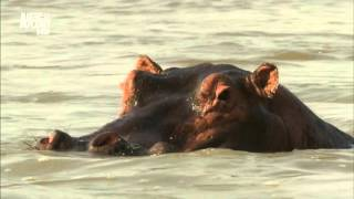 фильм сериал про природу и животных
