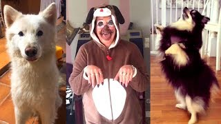 Cute Cats And Dogs Dance in DJ Song    TikTok Masti