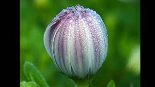 Bildergalerie Diashow Fotos auf DVD Vorlage Nero Video Vision Kwik BD Blu-ray AVCHD Gallery