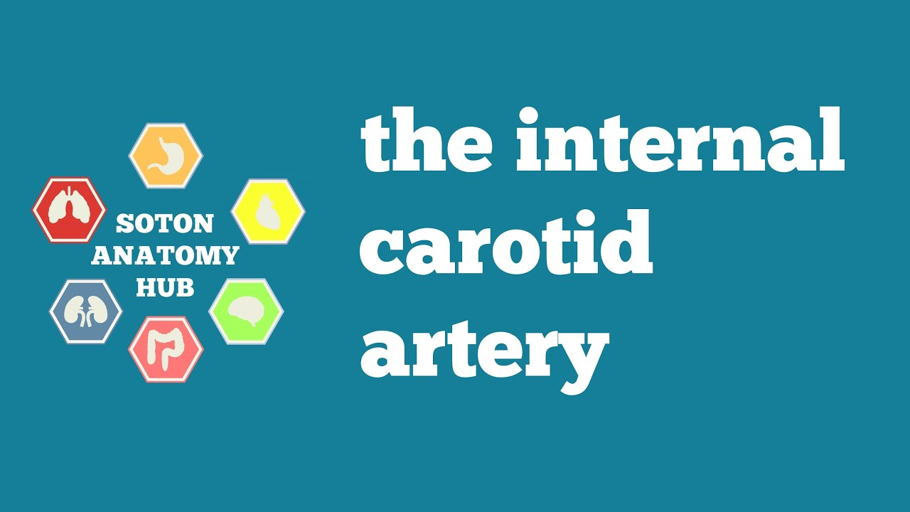 Internal carotid artery - YouTube