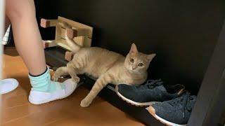 彷徨った末、ピアノの下で邪魔をする猫がかわいい