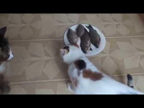 Коты и рыба