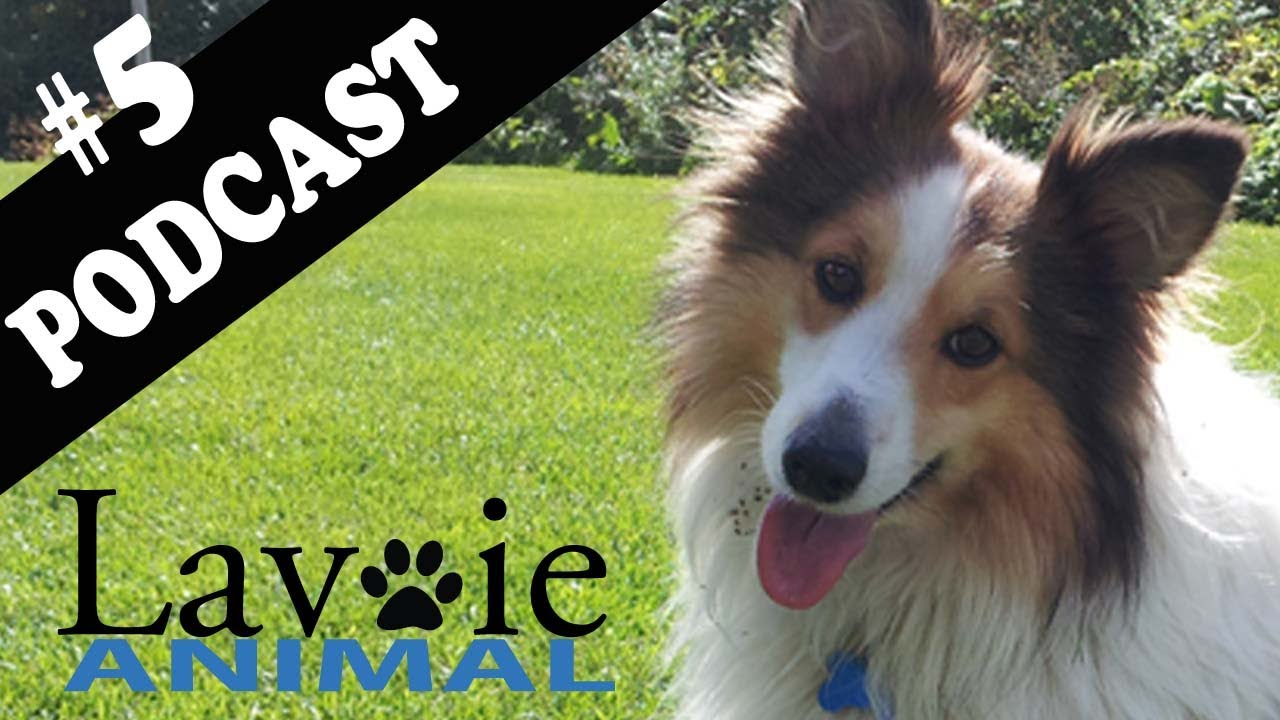Lavoie Animal Podcast
