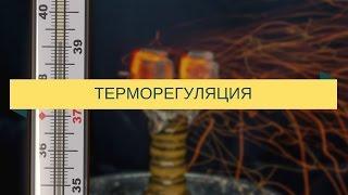 Терморегуляция при курении кальяна