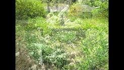 Botanical Garden NJ